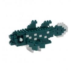 Coelacanth NBC-193...