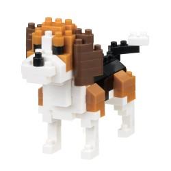 Beagle (Chien) NBC-253...