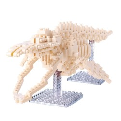 Blue Whale Skeleton NBM-010...