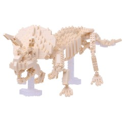Triceratops skeleton...